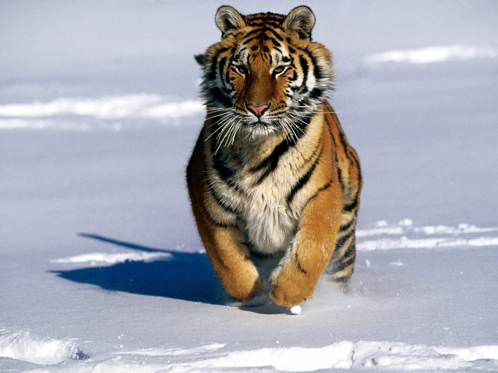 The World's Most Amazing and Crucial Endangered Species
