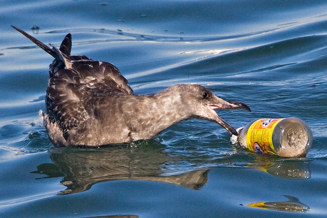 It Takes 1,000 Years for Waters Bottle to Biodegrade - And Other Shocking Facts