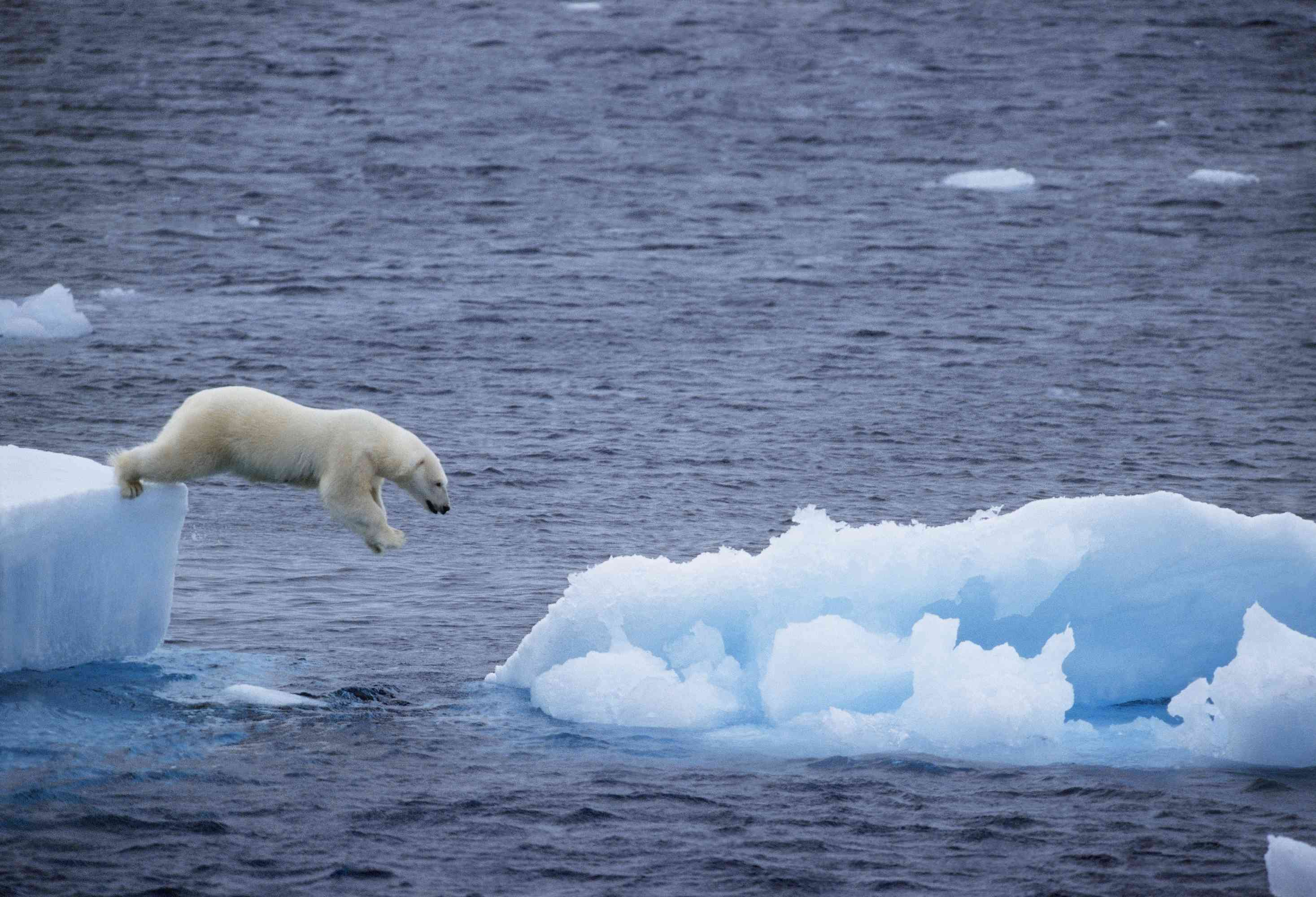 Polar Ice Caps Melting - Facts and Implications